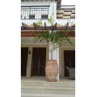 Luxury villa in Aphrodite Hills